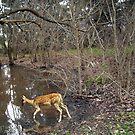 deer ii by Graham Dean
