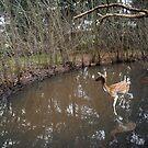 deer iii by Graham Dean