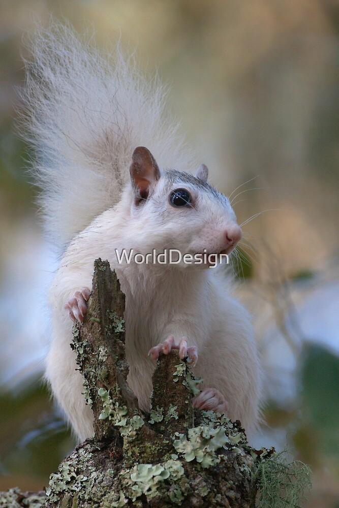 Astronaut Squirrel by WorldDesign