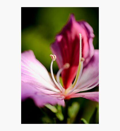 Pink Flower along Brisbane River  Photographic Print