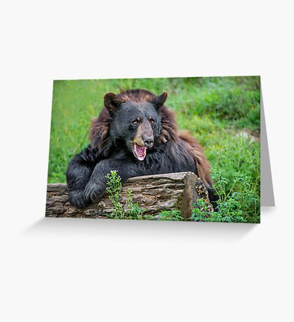 Are You looking at ME! Greeting Card