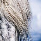 Icelandic Horse - Hjorsey Island, Iceland by Sue Ratcliffe