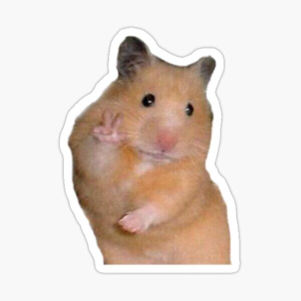 Hamster Aesthetic Gifts Merchandise Redbubble