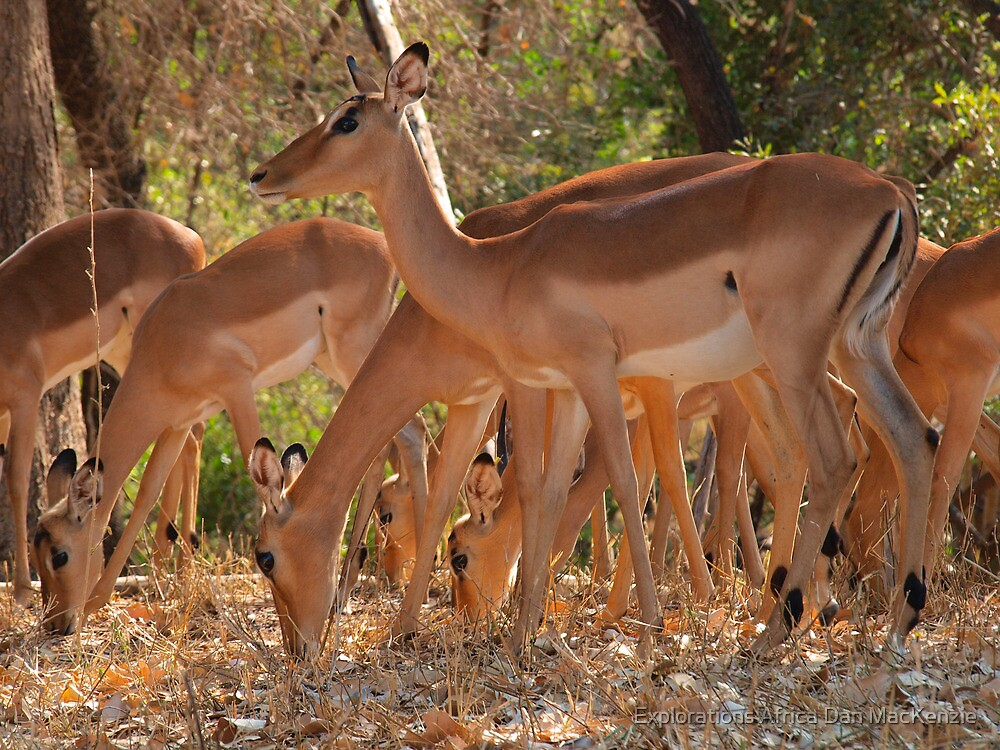 Safety in numbers by Explorations Africa Dan MacKenzie