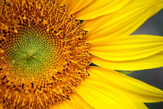 Sunflower Seeds by Sunshinesmile83