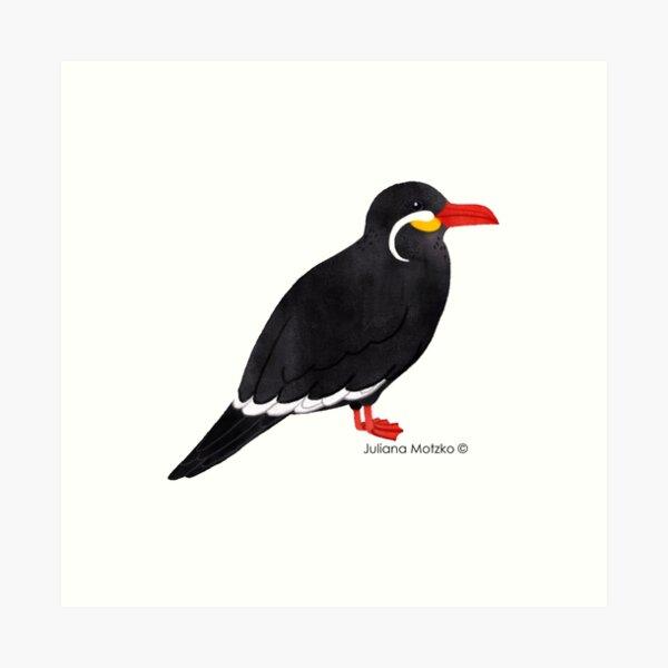 Inca Tern  Art Print