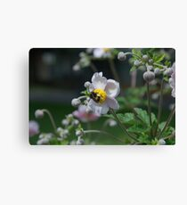 Flower Purple Insect Hummel Canvas Print