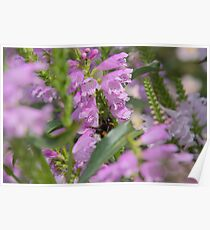 Flowers Garden Insect Hummel Pink Poster