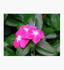 Flower Pink Nature Macro Photographic Print