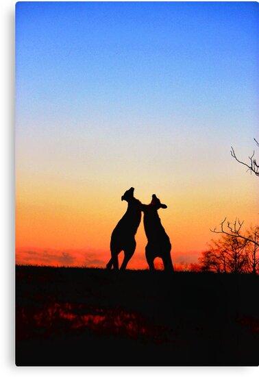 Sunset Serenade Pair of Kangaroos Australian Icon by Kym Bradley