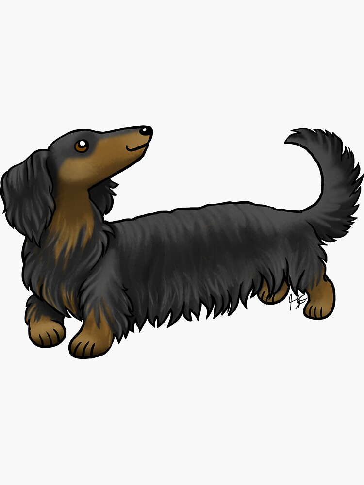 Long Haired Dachshund - Black and Tan by jameson9101322