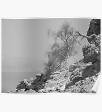 Tree and Dead Sea Poster