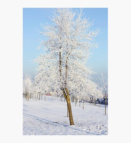 The whitest tree Photographic Print