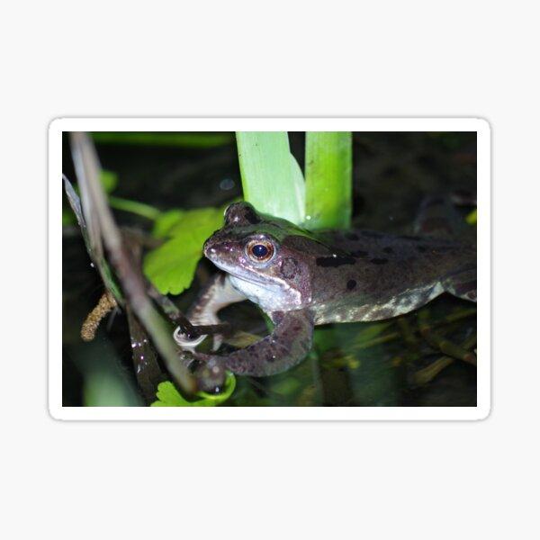 Common Frog Sticker