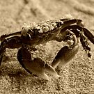 Little Crab by saseoche