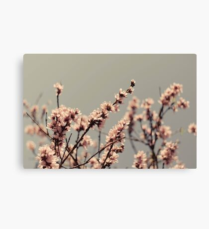 Blossoms... Canvas Print