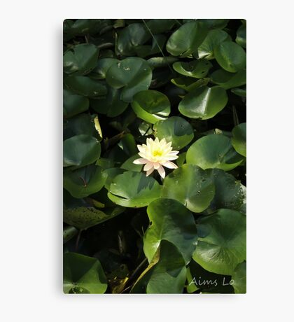 Lotus Flower & Lily Pads Canvas Print