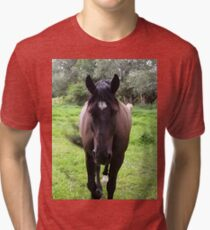 Horse on pasture Tri-blend T-Shirt