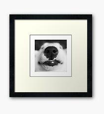 Molly - English Bull Terrier Framed Print