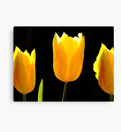The Light of Flowers Canvas Print