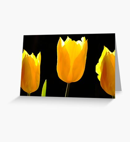 The Light of Flowers Greeting Card