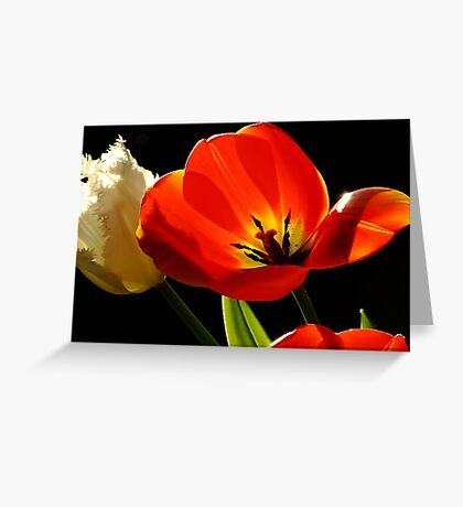 Tulip Delight Greeting Card