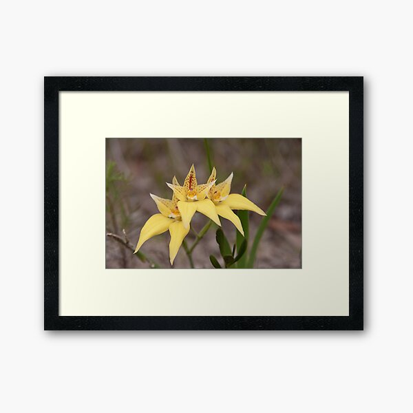 Cowslips by three Framed Art Print