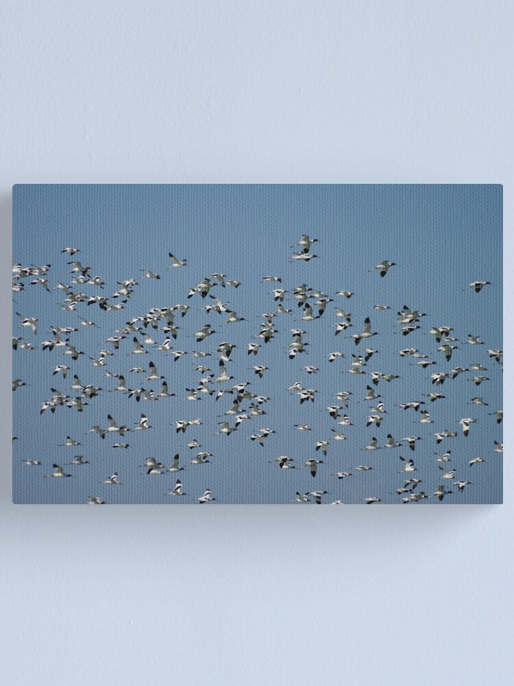 Alternate view of The Flock Canvas Print