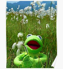 Cottongrass Bog Meadow Flower White Nature Poster