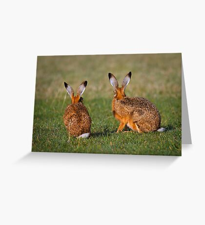 Hares Have Ears Greeting Card
