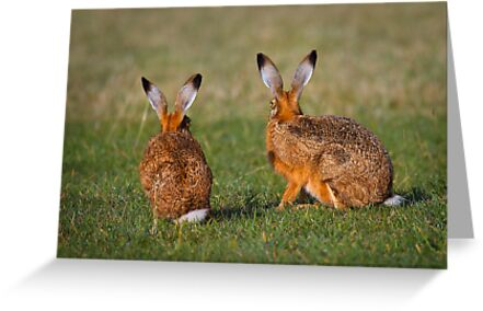Hares Have Ears by Patricia Jacobs DPAGB LRPS BPE4