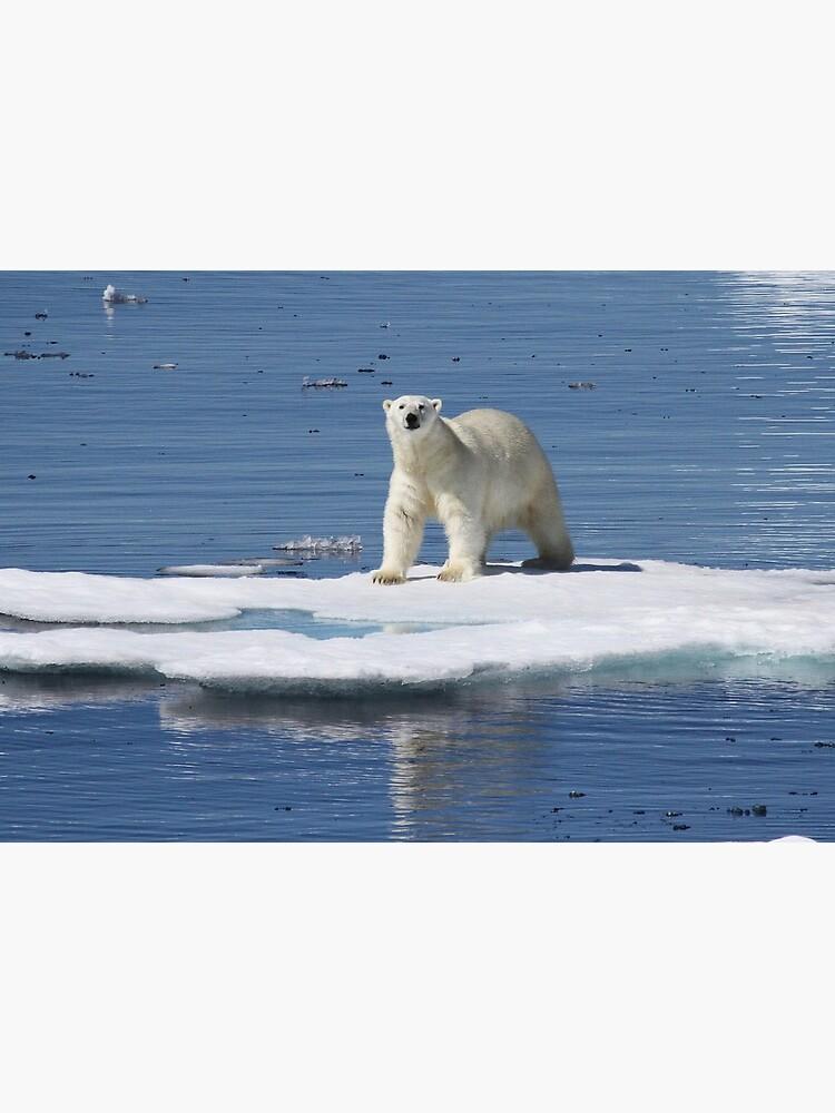 «Polar bear on the ice with his kill» par mjoncheres