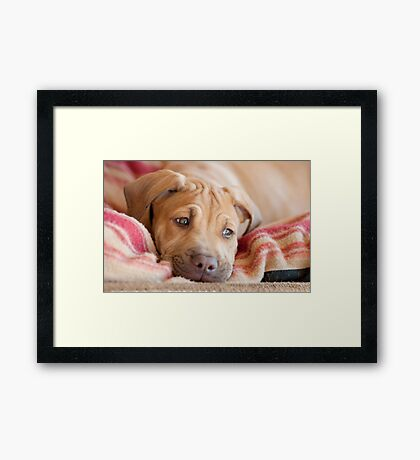 Little Big Red Framed Print