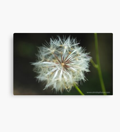 Make a Dandelion Wish Canvas Print