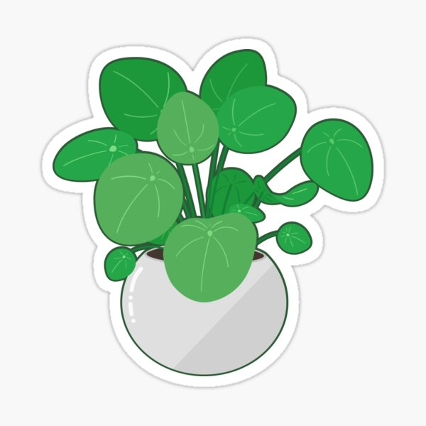 cute pilea peperomioides - chinese money plant Sticker