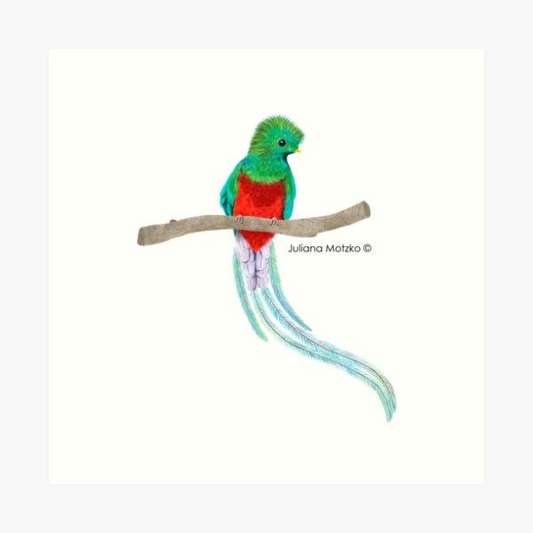 Quetzal Bird Art Print