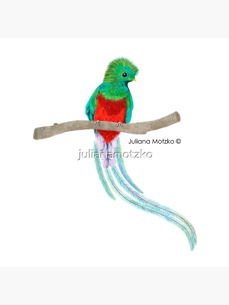 Quetzal Bird by julianamotzko