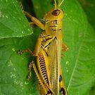 Yellow Grasshopper by Betty Mackey