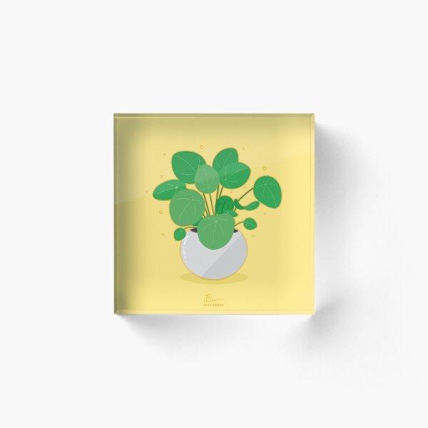 cute pilea peperomioides - chinese money plant Acrylic Block