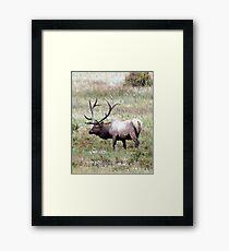 Bull Elk Framed Print