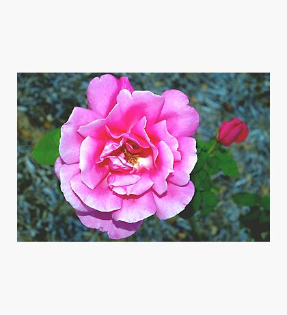 Rose and its new friend Photographic Print