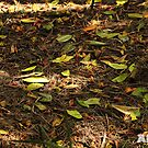 Green Leaves on the Ground by -aimslo-