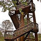Stairway to the Trees by John Thurgood