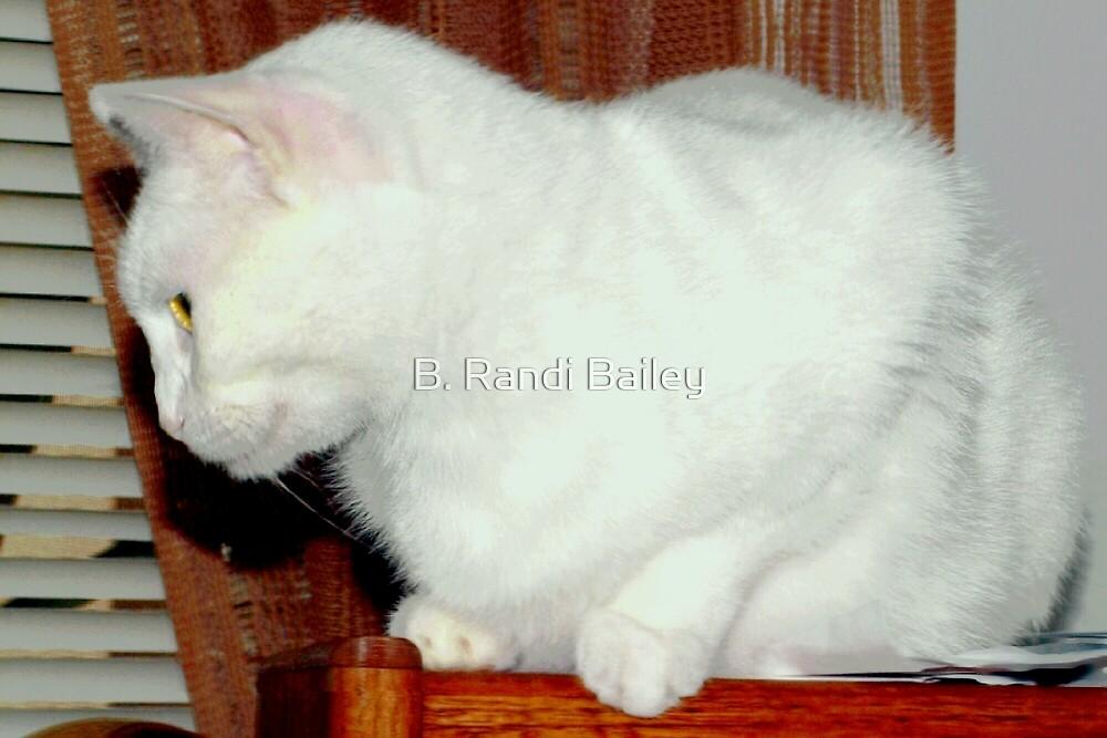 Perched on a bookshelf by ♥⊱ B. Randi Bailey