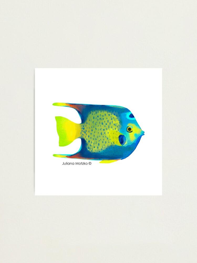 Alternate view of Angelfish Photographic Print