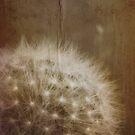 vintage dandelion by © Karin Taylor