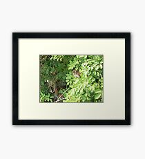 Island Monkey Framed Print