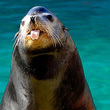 Silly Seal by SLRphotography