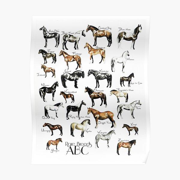 Rare Horse Breeds ABC  Poster