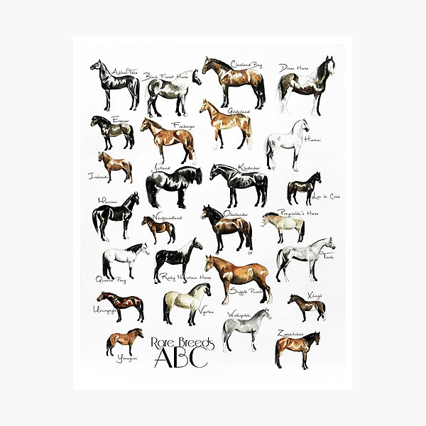 Rare Horse Breeds ABC  Photographic Print